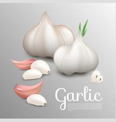 Fresh natural garlic concept vector
