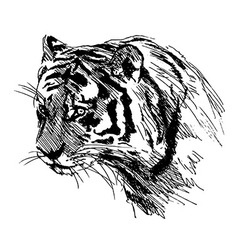 Hand sketch of the head of the tiger vector image vector image