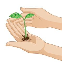 hand holding plant vector image