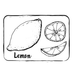 fruit sketch black and white fruit sketch hand vector image
