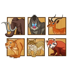 Wild animals on square frame vector