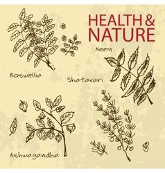 Handdrawn - health and nature set vector