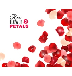 Rose flower petals background vector