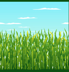 Green corn plants background vector