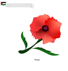 Red poppies the popular flower of palestine vector