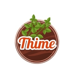 Thime spice vector