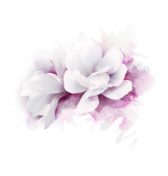 Two white beautiful magnolias vector