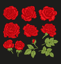Big set with red rose flowers and leaves in vector