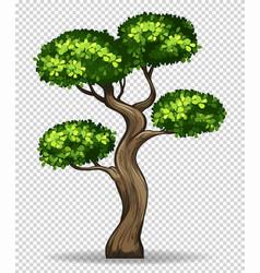 Bonsai tree on transparent background vector