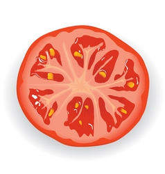 Fresh tomato piece vector