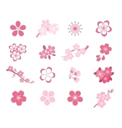 Cherry blossom japanese sakura icon set vector image
