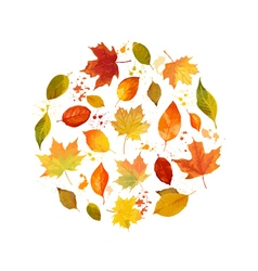 Colorful Autumn Leaves Background vector image