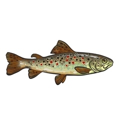 Hand drawn rainbow trout sketch style vector image vector image