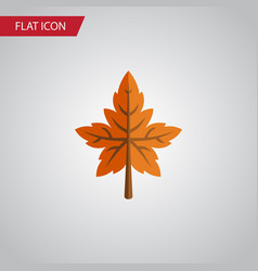 Isolated aspen flat icon alder element can vector