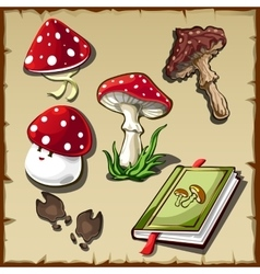 Set of poisonous mushrooms and cookbook vector