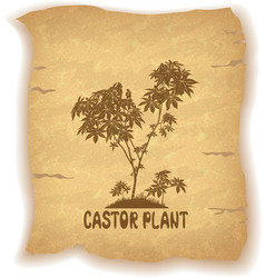 Castor plant on old paper vector