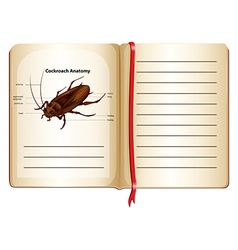 Cockroach anatomy on a book vector