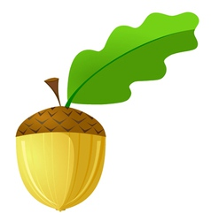 acorn is not a white background vector image vector image