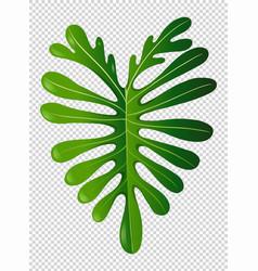 Green leaf on transparent background vector