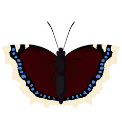 butterfly morning cloak vector image
