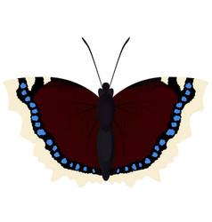 Butterfly morning cloak vector