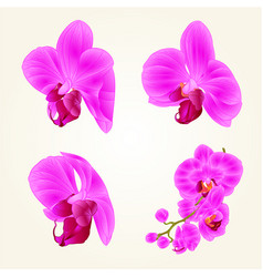 Beautiful purple orchid flowers closeup vector