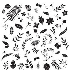 Botanical elements set vector image