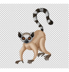 Cute lemur on transparent background vector