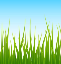 Green grass blue sky seamless background vector
