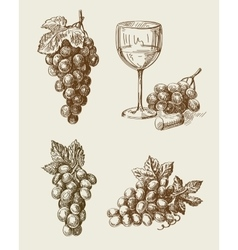 Grape doodle vector