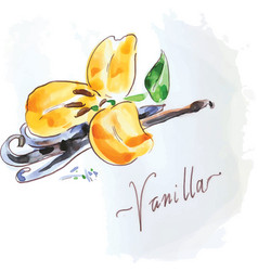vanilla flower of yellow color vector image