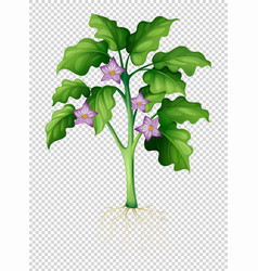 Eggplant tree on transparent background vector