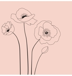 Poppies flowers vector
