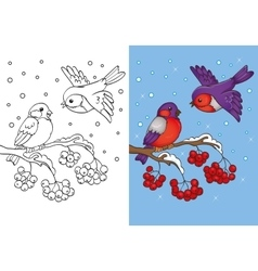 Coloring Book Of Bullfinches Sitting On Branch vector image