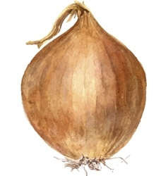 brown onion bulb vector image