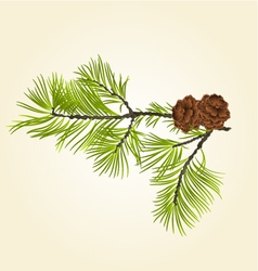 Conifer branch pine with pine cones vector