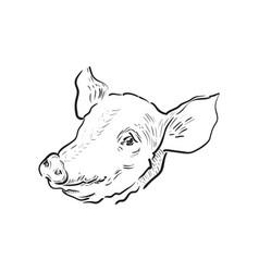 sketch pig icon vector image