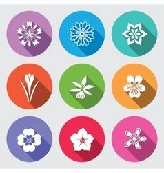 Botany flower set camomile daisy petunia vector