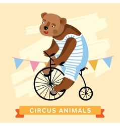 Circus bear animal series vector