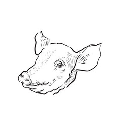 sketch pig icon vector image