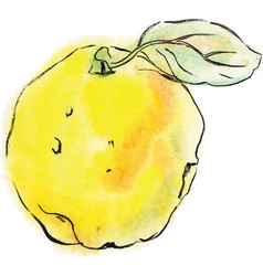 Quince fruit of yellow color vector