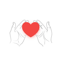 red heart in hands on a white background vector image vector image