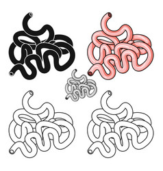 Human small intestine icon in cartoon style vector