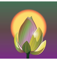 Lotus and sunrise vector