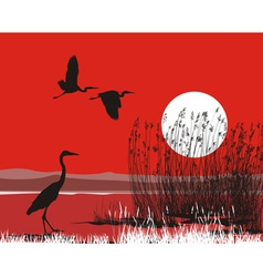 Herons on shore vector