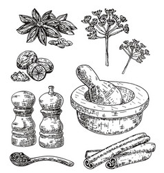 ink hand drawn culinary herbs and spices vector image vector image