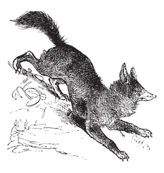 Red Fox vintage engraving vector image vector image
