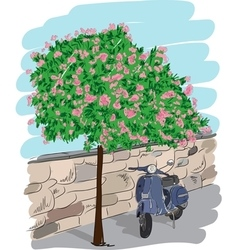 Scooter near a tree vector