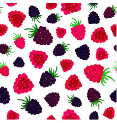 Raspberry background painted pattern vector