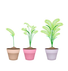 Cereal plants or ferns in terracotta flower pots vector
